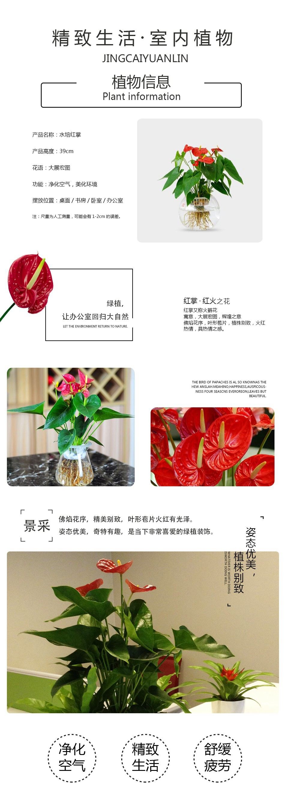 水培红掌详情页.jpg