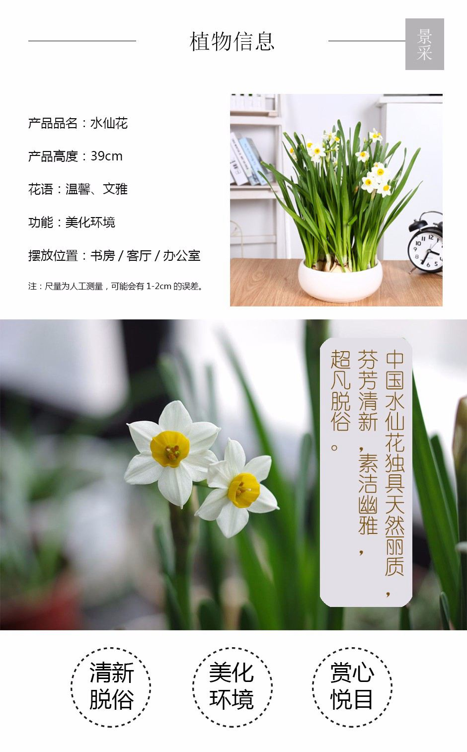 水仙花详情页.jpg