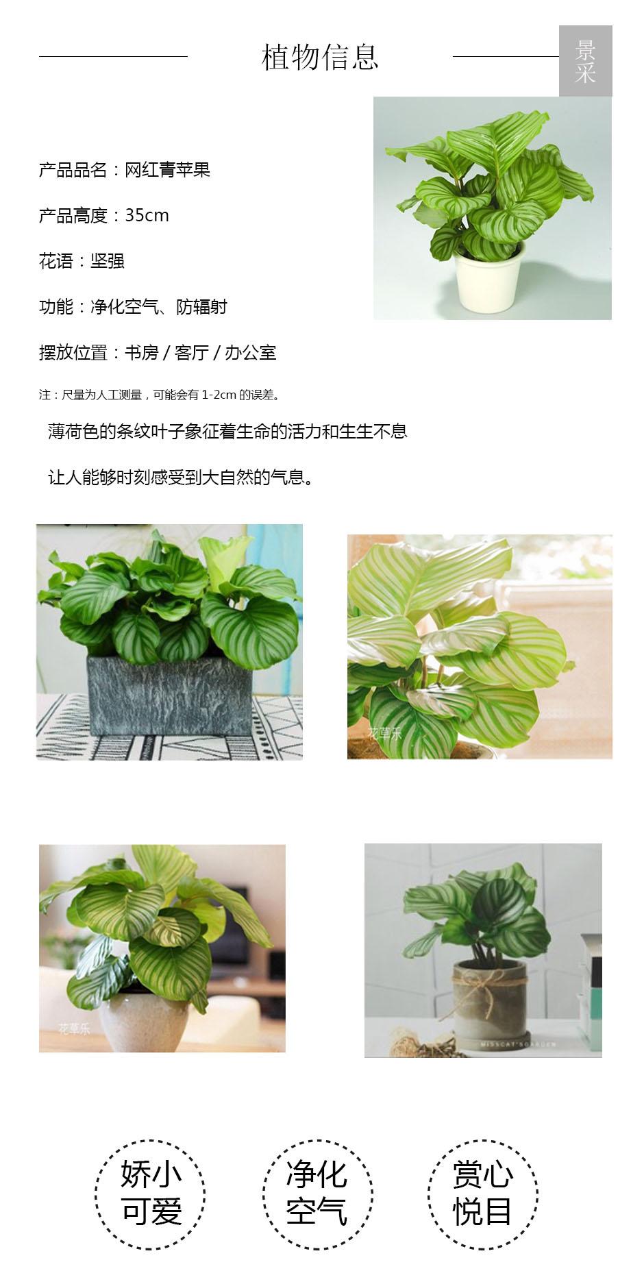 网红青苹果详情页.jpg