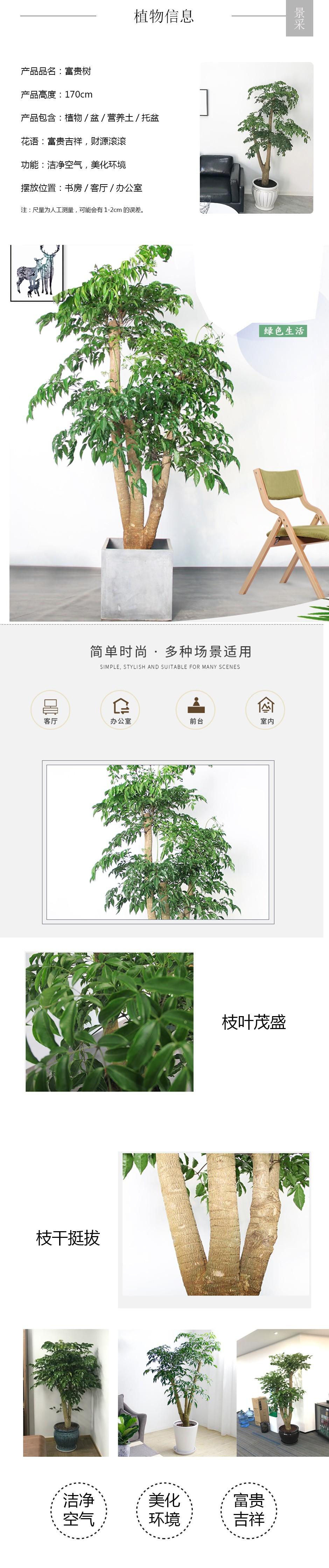 2020富贵树详情页.jpg
