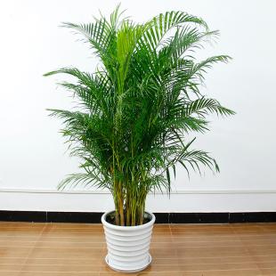 夏威夷竹-现代化4.jpg