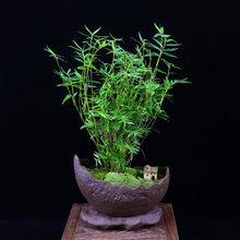 竹盆景.jpg